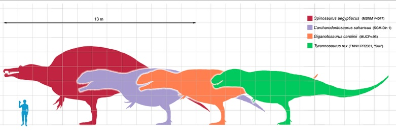 Size comparison of selected giant theropod dinosaurs and a human. Photo- Wikicommons.