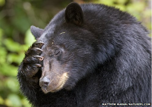 Bear Deep in thought. Photo: BBC.