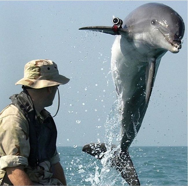 A trained bottlenose dolphin named K-Dog leaps out of the water during a training exercise in the Persian Gulf.  Petty Officer 1st Class Bria Aho, US Navy.