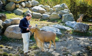 Dr. Vint Virga (lft) with patient Molly, Barbary sheep. who has extreme anxiety after tail amputation. Credit Robin Schwartz for The New York Times