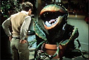 Man-eating plant Audrey II in film Little Shop of Horrors. Dailymail