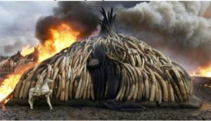 Authorities in Kenya set fire to a huge quantity of rhino horns, elephant tusks and ivory figurines in April. Getty Images