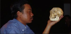 Thomas Sutikna holds the skull of LB1, the type specimen of the 'Hobbit', Homo floresiensis. Photo courtesy of the Indonesian National Centre for Archaeology.
