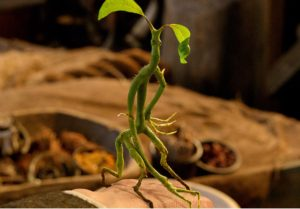 the-bowtruckle-credit-warner-bros